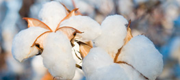 Cotton from Engel